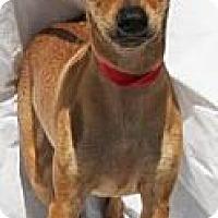 Adopt A Pet :: Willetta - Gilbert, AZ