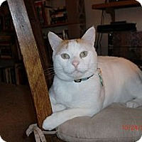 Adopt A Pet :: Sherman - San Luis Obispo, CA