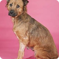 Adopt A Pet :: Mama (gentle!) - Chicago, IL