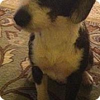 Adopt A Pet :: Janey - Raleigh, NC