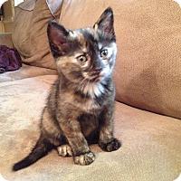 Adopt A Pet :: Bay - Richmond, VA