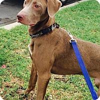 Adopt A Pet :: Waldon - Sun Valley, CA