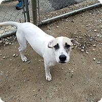 Adopt A Pet :: Perla - Freeport, ME
