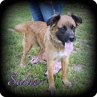 Adopt A Pet :: Sadie - Denver, NC
