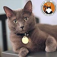 Adopt A Pet :: Smokey Bones - Hilliard, OH