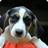 Adopt A Pet :: Angel - Bedford, VA