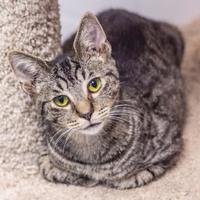 Adopt A Pet :: Jeremy - Palm Coast, FL