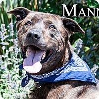 Adopt A Pet :: Manny - Hamilton, MT