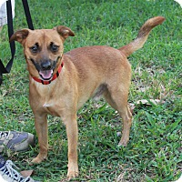 Adopt A Pet :: Frankie - Boca Raton, FL