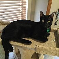 Adopt A Pet :: Renee's Bairn - Yukon, OK