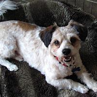 Adopt A Pet :: Newman - Roseville, CA