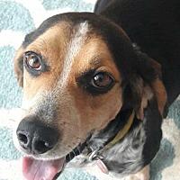 Adopt A Pet :: Mr. Wilson - Atlanta, GA