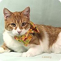 Adopt A Pet :: Cammy - Kerrville, TX