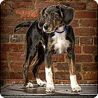 Adopt A Pet :: Eli - Owensboro, KY