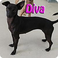 Adopt A Pet :: Diva - Midland, TX