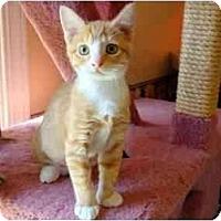 Adopt A Pet :: ET - Arlington, VA