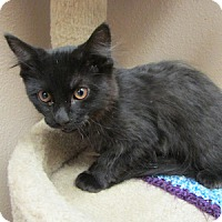 Adopt A Pet :: Pickles - Gilbert, AZ