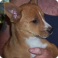 Adopt A Pet :: Lulu - Marshfield, MA