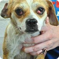 Adopt A Pet :: Wesson - Albert Lea, MN
