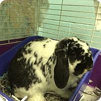 Adopt A Pet :: Pandora - Maple Shade, NJ