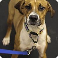 Adopt A Pet :: Loxy - Jupiter, FL