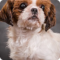Adopt A Pet :: Missy Ann - Owensboro, KY