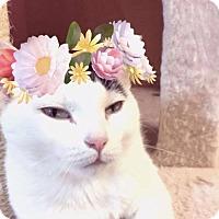 Adopt A Pet :: Blanca - Newland, NC