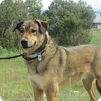 Adopt A Pet :: Jack - Ridgway, CO