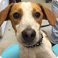 Adopt A Pet :: Frisky - Morehead, KY