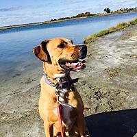 Hound (Unknown Type) Mix Dog for adoption in Washington, D.C. - Austin