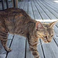 Adopt A Pet :: Paulette - Newaygo, MI