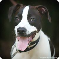 Adopt A Pet :: Reedus - Fayetteville, GA