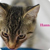 Adopt A Pet :: Hannah - Miami Shores, FL