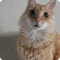 Adopt A Pet :: B U D D Y - Brea, CA