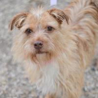 Adopt A Pet :: Caitlyn - Madison, WI