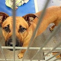 Adopt A Pet :: A3973443 - Phoenix, AZ