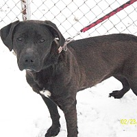 Adopt A Pet :: Shelby - Portland, IN