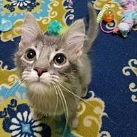 Adopt A Pet :: Quicksilver - Edmond, OK