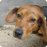 Adopt A Pet :: ROSALEE - Sudbury, MA
