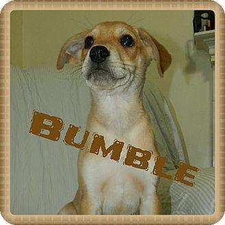 Terrier (Unknown Type, Medium)/Beagle Mix Puppy for adoption in Newnan, Georgia - Bumble