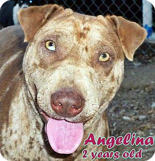 Shar Pei/Catahoula Leopard Dog Mix Dog for adoption in Boaz, Alabama - Angelina