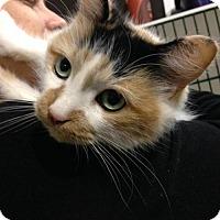 Adopt A Pet :: Cappacino - Hamilton, ON