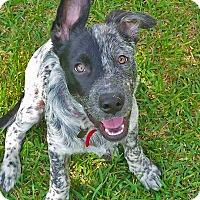 Adopt A Pet :: Hondo - Houston, TX