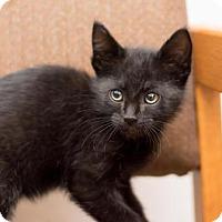 Adopt A Pet :: Otis - Fountain Hills, AZ