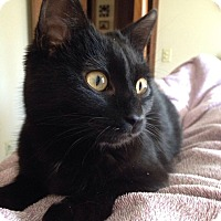 Adopt A Pet :: Cosmo - Plymouth, MN