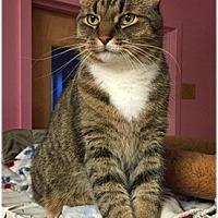 Adopt A Pet :: Chloe - Milford, MA