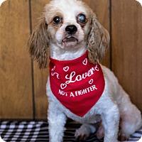 Adopt A Pet :: Drake - Tavares, FL