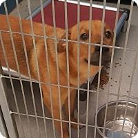 Adopt A Pet :: Rico Suave - Manhasset, NY