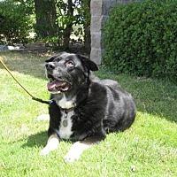 Adopt A Pet :: Meiko - McArthur, CA