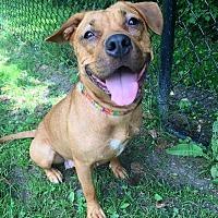 Adopt A Pet :: Kindle - Cambridge, MD